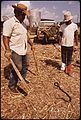 WORKMEN KILLING A WATER MOCCASIN - NARA - 544254.jpg