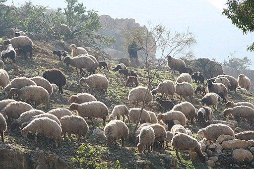 Wadee Shoayb - panoramio (9)