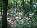 Wald - panoramio (1).jpg