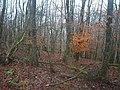 Wald nahe Achtfeld (Woodland near Achtfeld) - geo.hlipp.de - 23426.jpg