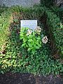 Waldfriedhof dahlem ehrengrab Luft, Friedrich1.jpg