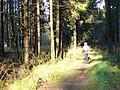 Waldweg beim Schneifelhoehenweg - geo.hlipp.de - 6222.jpg