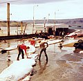 WalvisSlachtInIJsland.jpg
