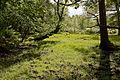 Warwickslade Cutting, original stream bed - geograph.org.uk - 1548554.jpg
