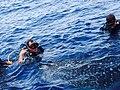 Whaleshark KohChang2.jpg