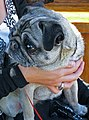 What is this thing called dog - Bondi, 2010.jpg