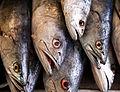 White sea bass mexico.jpg
