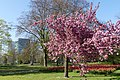 Wilhelminapark, Breda P1360748.jpg