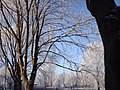 Winter , kornalijnstreet , vinkhuizen , groningen - panoramio - thepirate59.jpg
