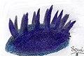 Wiwaxia taijianjenjis (1).jpg