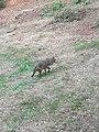 Wolf - 3.jpg