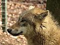 Wolf OS 01.JPG
