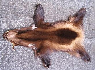 Peau dont la fourrure présente des nuances de brun sur le dos, avec les pattes plus foncées