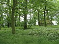 Woodland, Flass - geograph.org.uk - 454125.jpg