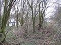 Woodland, Tullichewan - geograph.org.uk - 723886.jpg