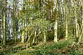 Woodland on Farnborough Down - geograph.org.uk - 1591891.jpg