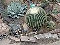 World Deserts - US Botanic Gardens 45.jpg