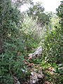 Yagur – Nesher, the Green Path – Mount Carmel 100.JPG