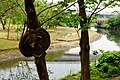 Yongfu Park 永福公園 - panoramio.jpg