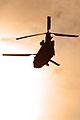 ZH775 Boeing Chinook HC2 (352) RAF (12979841994).jpg