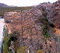 Z aloe perfoliatas on greyton cliff face 3.JPG
