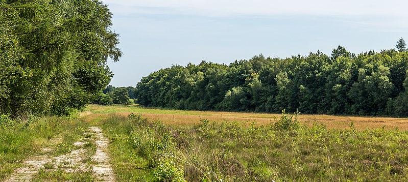 File:Zandpad aan buitenkant van het gebied. Locatie, Stuttebosch in de lendevallei. Provincie Friesland 02.jpg