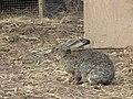 Zoo des 3 vallées - Animaux - 2015-01-02 - i3357.jpg