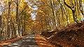 Δρόμος μέσα στο Δάσος από Οξιές.jpg