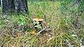 Грибы в лесу после дождя.jpg