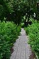 Западная часть парка Нивки. Фото 6.jpg