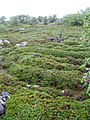 Заяцкий остров лабиринты.jpg