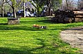 """Зајаци како дел од дворот на манастирот """"Св. Ѓорѓи"""" 1.JPG"""