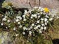 Иремель. И на вершине цветут цветы.jpg