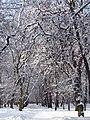 Ковалівський парк. Зима.jpg