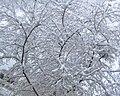 Мела метель всю ночь вид из окна утром (250805409).jpeg