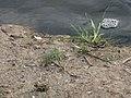 На бережке реки - panoramio.jpg