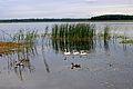 Озеро Пулемець 3.JPG