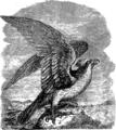 Орел 2 (БЭАН).png
