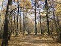 """Осень в парке """"Олимпик"""" - panoramio (1).jpg"""
