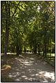 Паркова алея.jpg