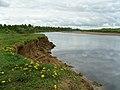 Подмытый берег - panoramio.jpg