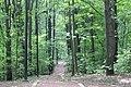 Природный заказник «Воробьёвы горы» - panoramio.jpg
