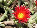 Растения в Седово 107.JPG