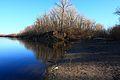 Река Донгуз впадает в Урал - panoramio.jpg
