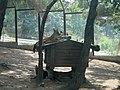 Сафари-парк. Красные волки - panoramio.jpg