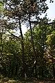 Ставищенський парк.jpg