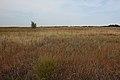 Степь с восточной стороны - panoramio (1).jpg