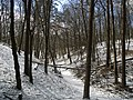 Украина, Киев - Голосеевский лес 28.jpg