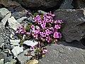Цветы у Голубого озера.jpg