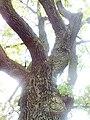 Чудернацьі форми дерева.jpg